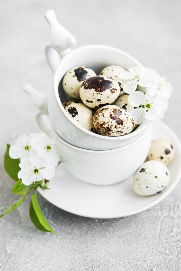 Taza con los huevos de codornices foto de archivo libre de regalías