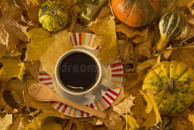 Taza de café rodeada por las hojas y las calabazas del amarillo foto de archivo