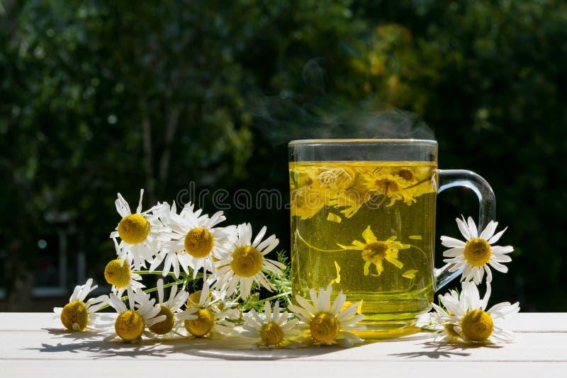Taza de cristal con la decocción de la manzanilla de la planta medicinal en el alféizar en el verano, el concepto de una forma de imagen de archivo libre de regalías