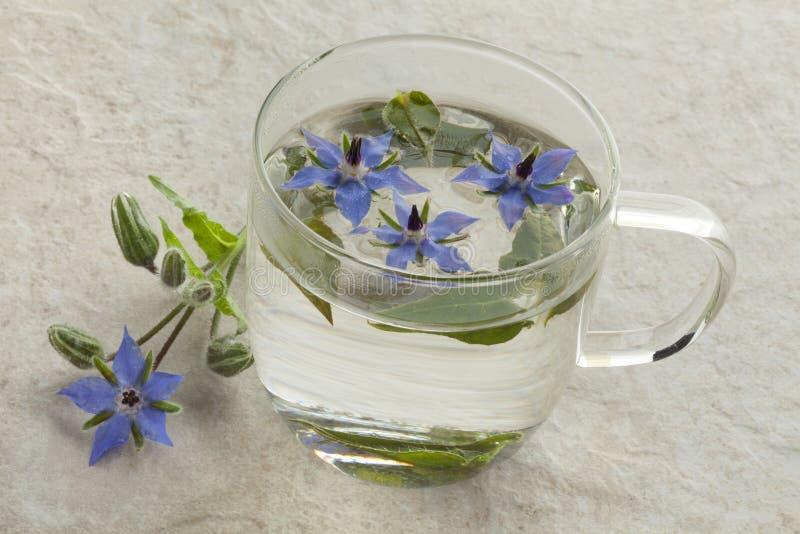 Taza de cristal con té de la borraja imagen de archivo libre de regalías