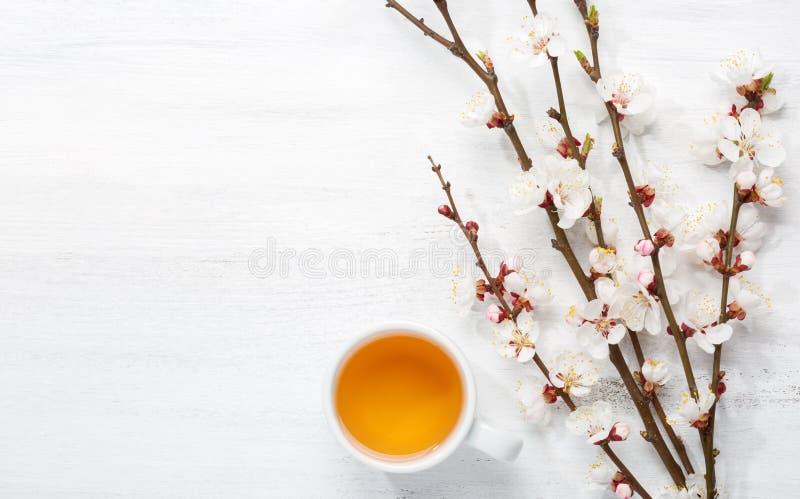 Taza de floraciones de las flores del té y de la primavera de un albaricoque en la tabla lamentable de madera vieja fotografía de archivo libre de regalías