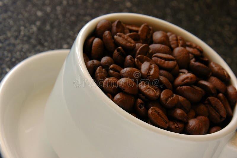 Taza de granos de café foto de archivo