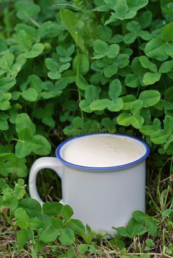 Taza de leche sobre fondo de la hierba del trébol fotos de archivo