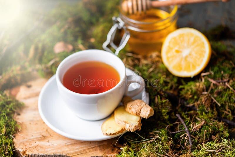 Taza de té con el limón, el jengibre y la miel en la madera y el musgo en el bosque imagen de archivo libre de regalías