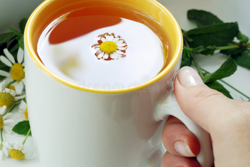 Taza de té del asimiento de la mano fotos de archivo libres de regalías