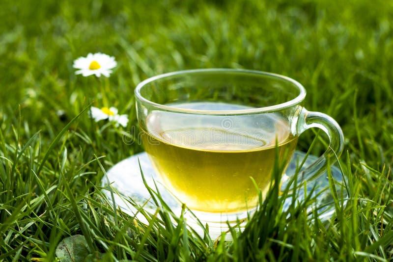 Taza de té en la hierba con las margaritas imagenes de archivo
