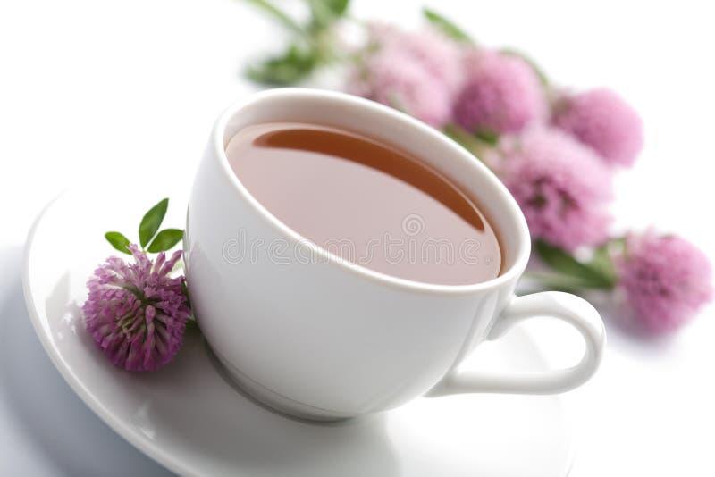 Taza de té herbario y flores aisladas imagenes de archivo