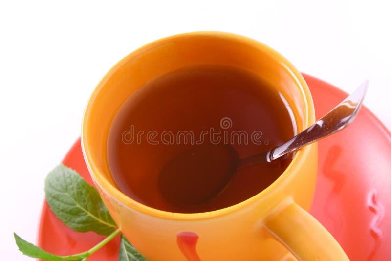 Taza de té verde en el platillo con la menta foto de archivo libre de regalías