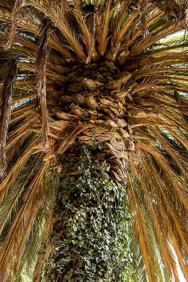 Taza de una palmera imagenes de archivo