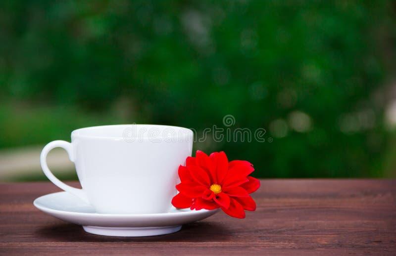 Taza y platillo blanco y flor roja en un fondo verde Una taza de té y una flor contra el contexto de un verano cultivan un huerto imagen de archivo libre de regalías
