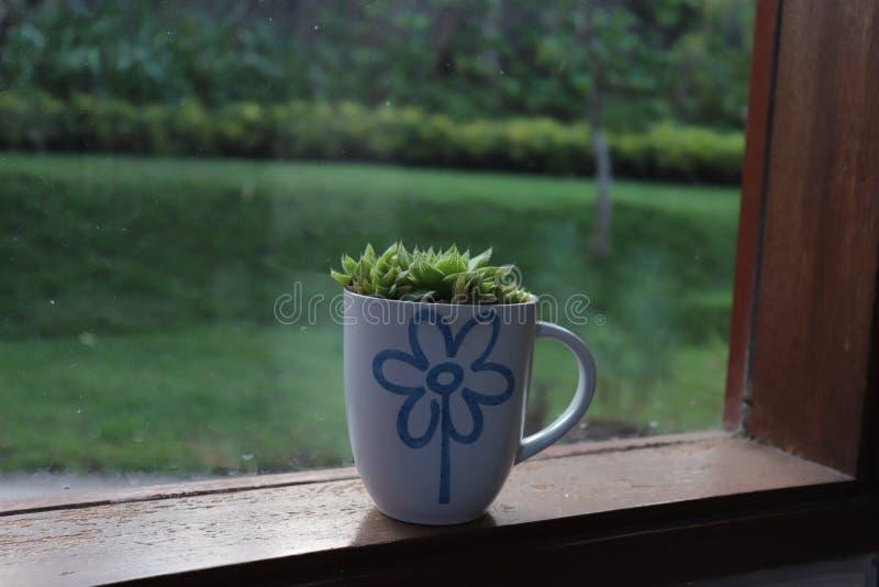 tazas de café de cerámica en las ventanas de cristal y las plantas succulant fotos de archivo