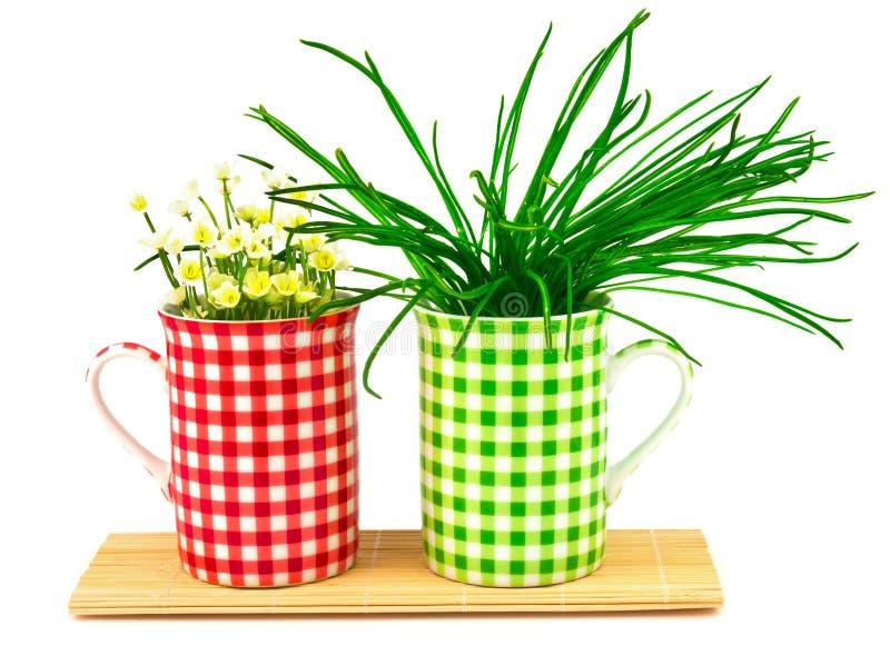 Tazas verdes y rojas con las flores y las plantas de la primavera en la estera imagenes de archivo
