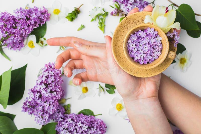 Tazza con i fiori lilla nelle mani di una ragazza su una b bianca fotografie stock