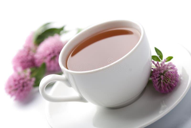 Tazza dei fiori del trifoglio e del tè di erbe isolati fotografie stock libere da diritti