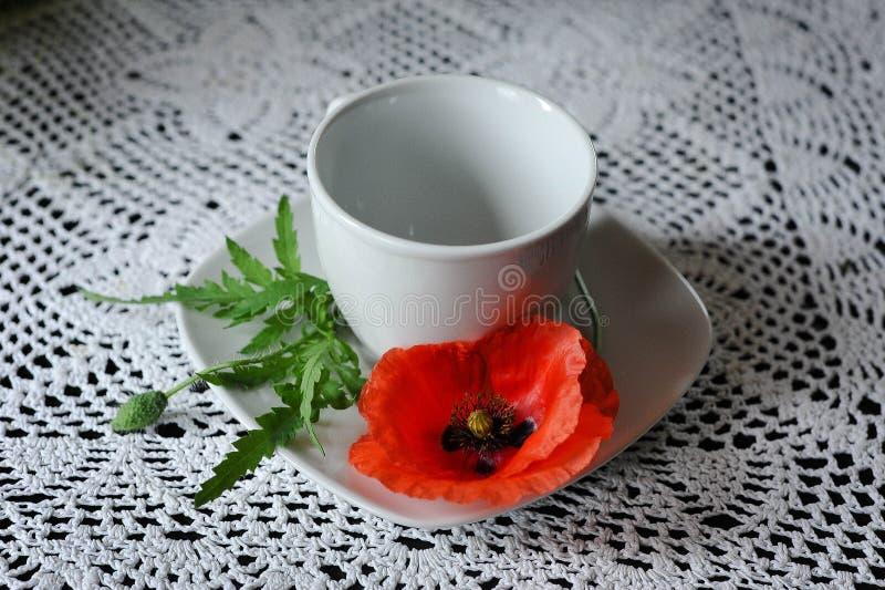 Tazza dei semi di papavero fotografie stock libere da diritti