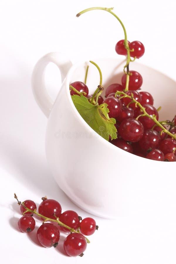 Tazza dell'uva passa fotografie stock libere da diritti