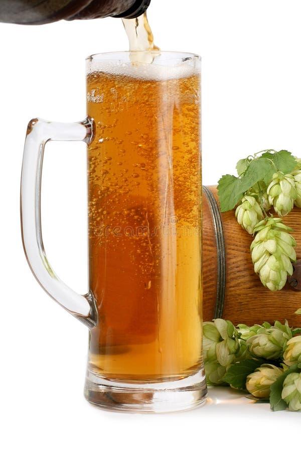 Tazza di birra, barilotto di birra dei luppoli verdi fotografia stock libera da diritti