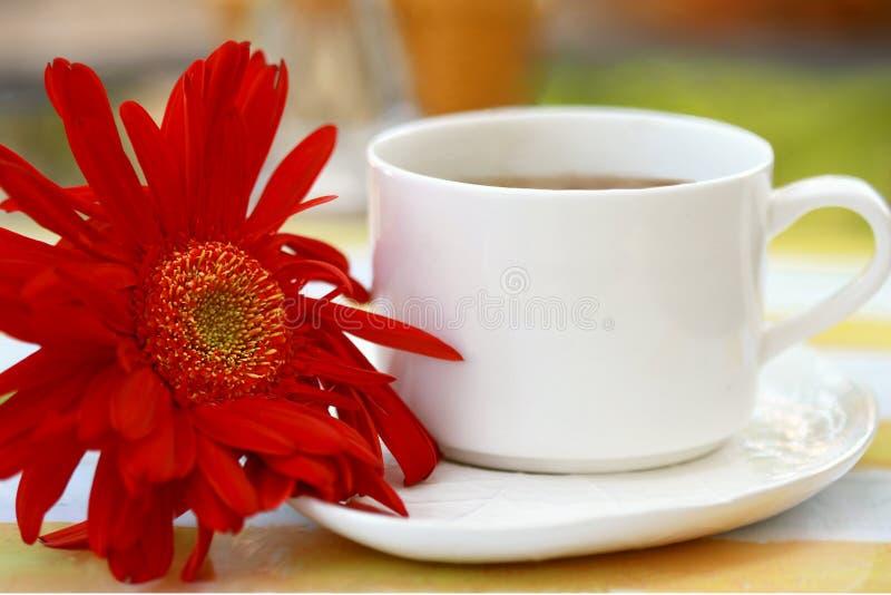 Tazza di caffè con il gerbera fotografia stock