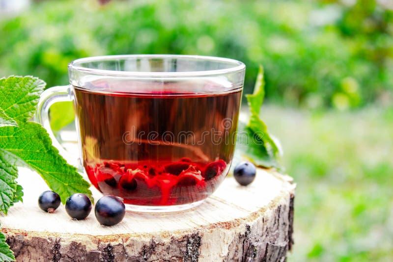 Tazza di vetro del tè della frutta con le bacche del ribes nero su una tavola di legno all'aperto fotografia stock libera da diritti