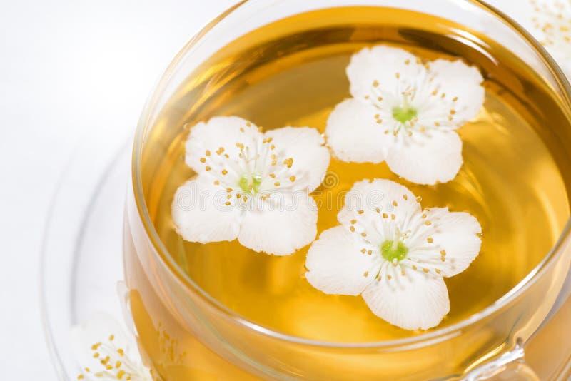 Tazza di vetro di tè verde fragrante fresco con il gelsomino su fondo bianco, vista superiore fotografie stock