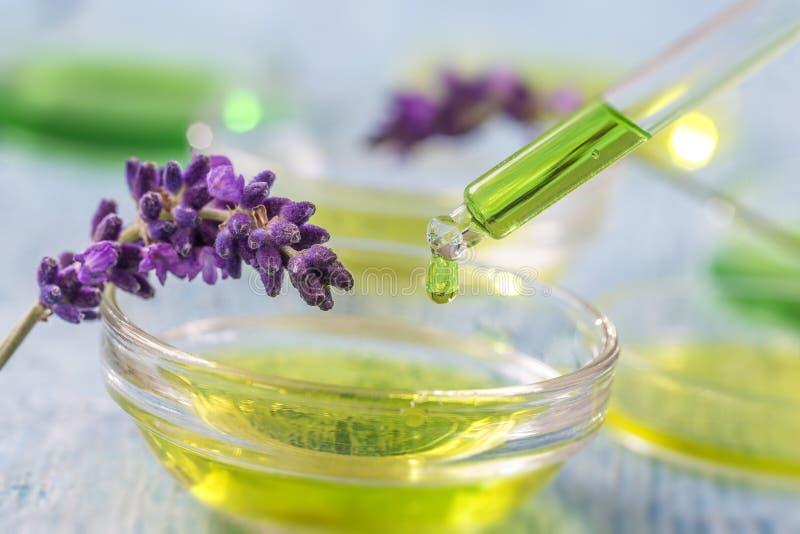 Tazza trasparente con il liquido essenziale della lavanda di gocce in contagoccia su fondo di legno con i fiori medicinali fotografie stock