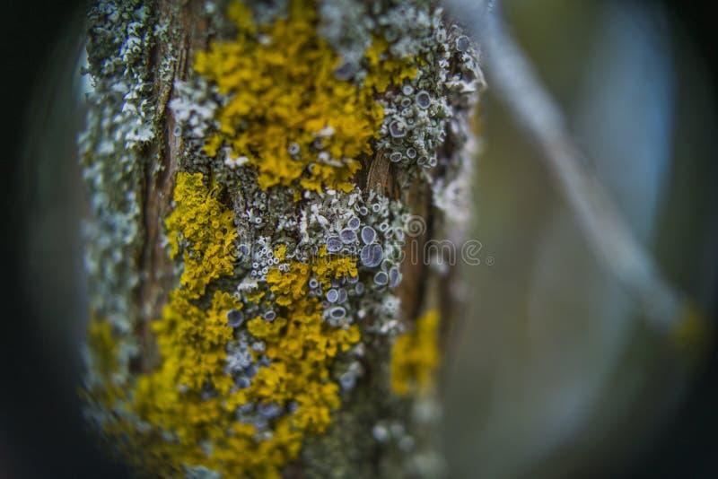 Tazze del lichene e del muschio fotografie stock