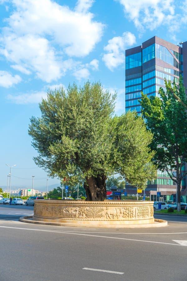 Tbilisi, Geórgia - 30 08 2018: oliveira na avenida de Rustaveli imagens de stock