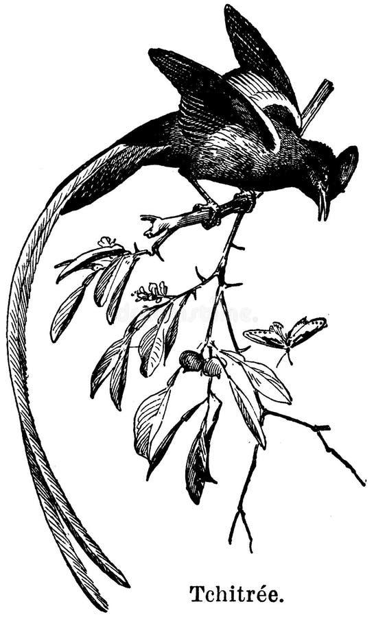 Tcitrée Free Public Domain Cc0 Image