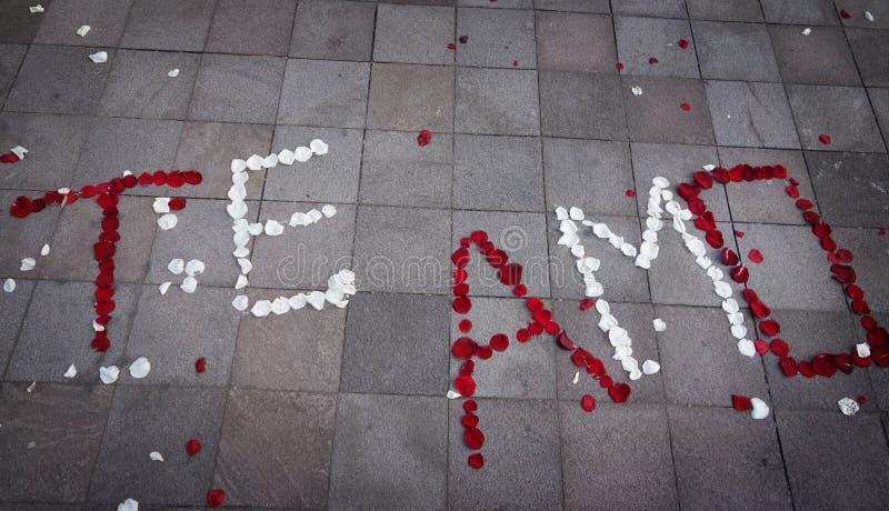 Te Amo Spanish für ich liebe dich buchstabiert heraus in den rosafarbenen Blumenblättern stockbild