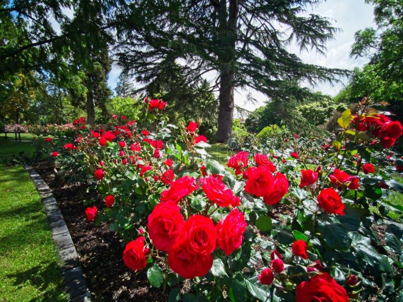 334 644 Rose Flower Garden Photos Free Amp Royalty Free Stock