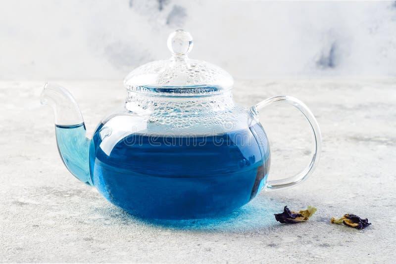 Te för blått för blomma för fjärilsärta Växt- drink för sund detox royaltyfri foto