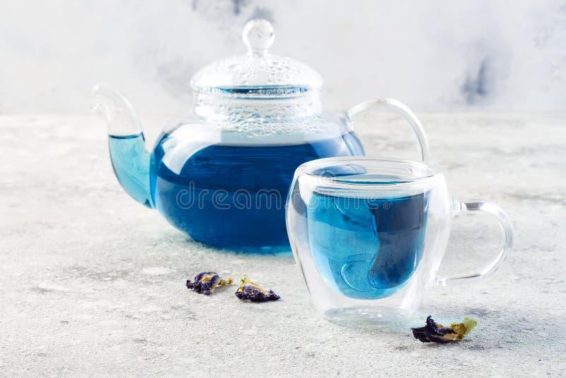 Te för blått för blomma för fjärilsärta Växt- drink för sund detox arkivbilder