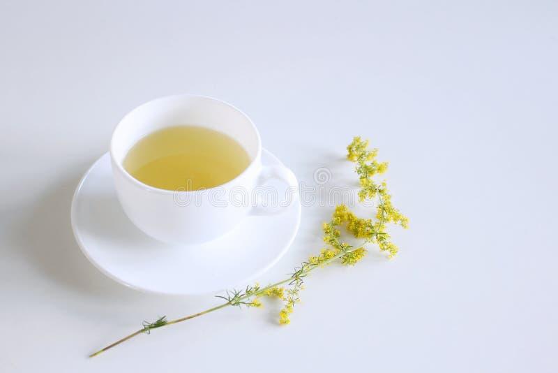 Te i porslin rånar på vit bakgrund med galumverum, bedstraw för dam` s eller gul bedstraw Den Galum verumen är en örtartad perenn royaltyfria foton