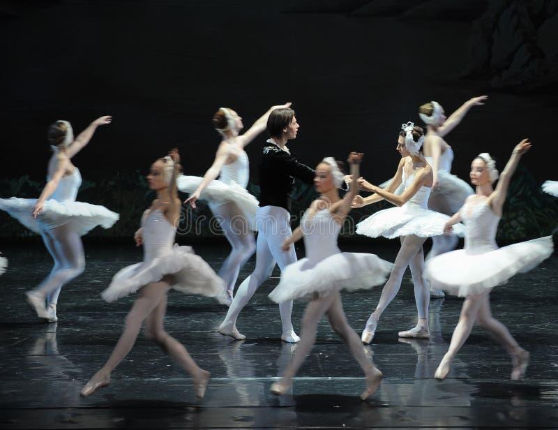 Te laat om de prins te betreuren het ojta-Zwaan oever van het meer-Ballet Zwaanmeer te vinden stock foto's
