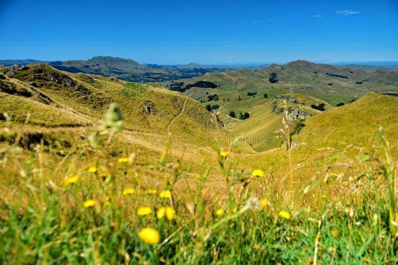 Te Mata Peak och omgeende landskap i Hastings, Hawkes fj?rd i Nya Zeeland arkivbilder