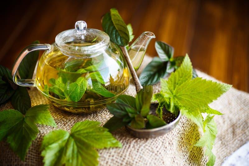 Te med vinbärsidor fotografering för bildbyråer