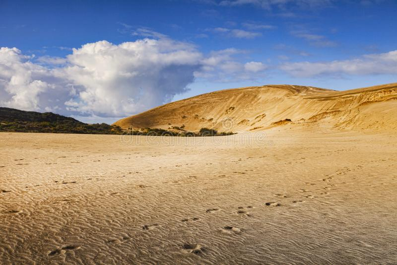 Te Paki Giant Sand Dunes, Northland, New Zealand. Te Paki giant sand dunes in Northland, New Zealand royalty free stock image