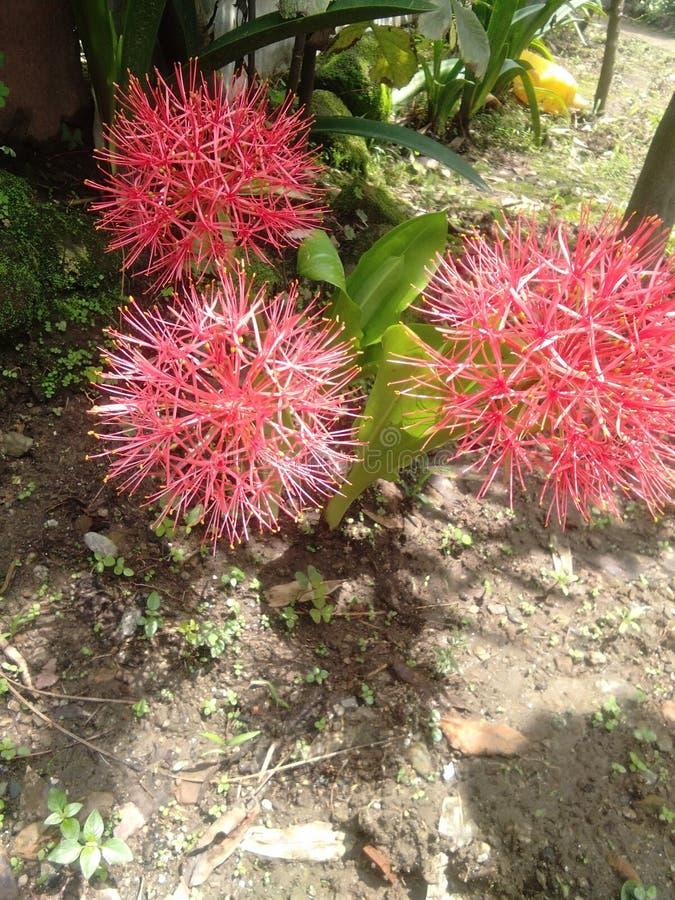 Te są Indiańscy kwiaty Kocham te kwiaty obrazy stock