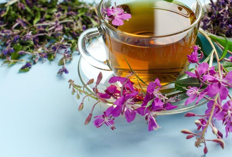 Te som göras från mjölkört tea för glass växt- för horsetail för fokus för arvensekoppequisetum selektiv naturmedicin för avkok m royaltyfri foto