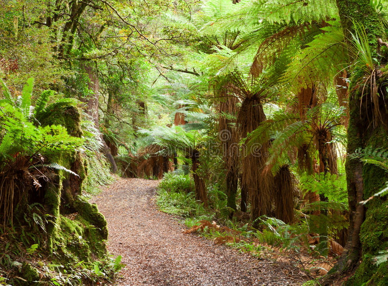 Te Urewera National Park norr ö, Nya Zeeland royaltyfria bilder