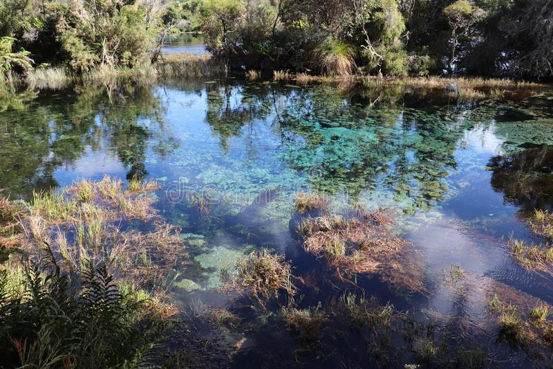 Te Waikoropupu Springs, ilha sul, Nova Zelândia foto de stock