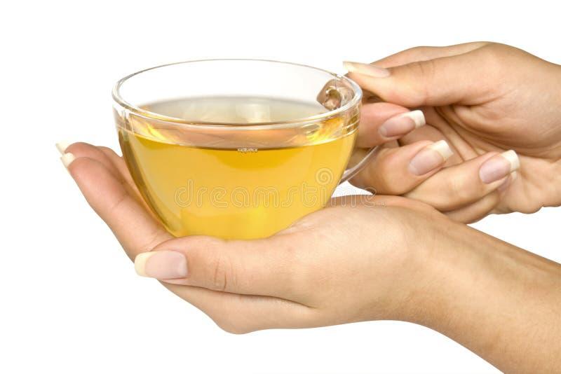 Download Tea stock image. Image of liquid, object, green, women - 19213093