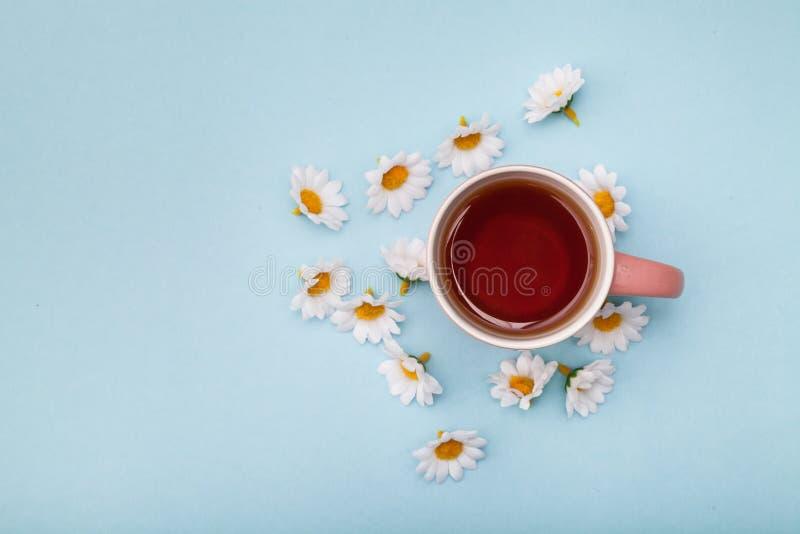 Tea and chamomile royalty free stock image