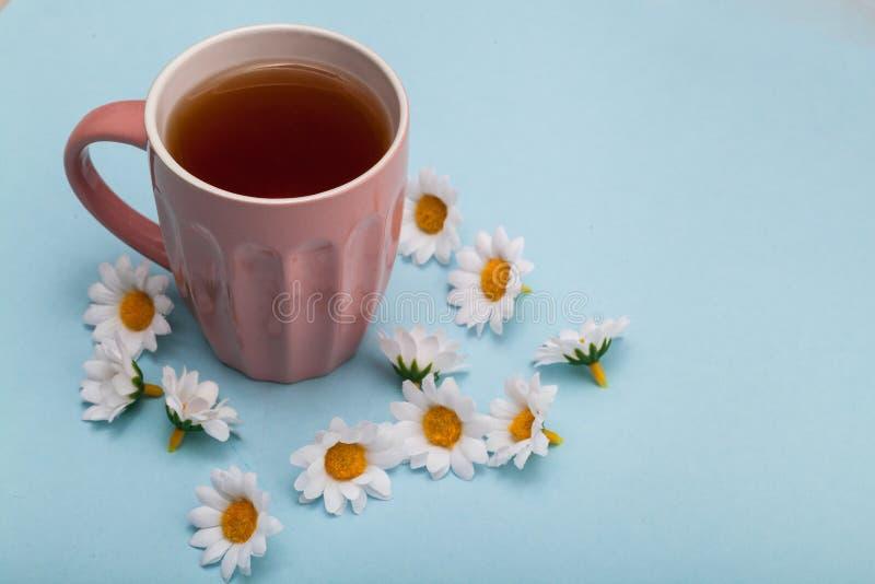 Tea and chamomile royalty free stock photos