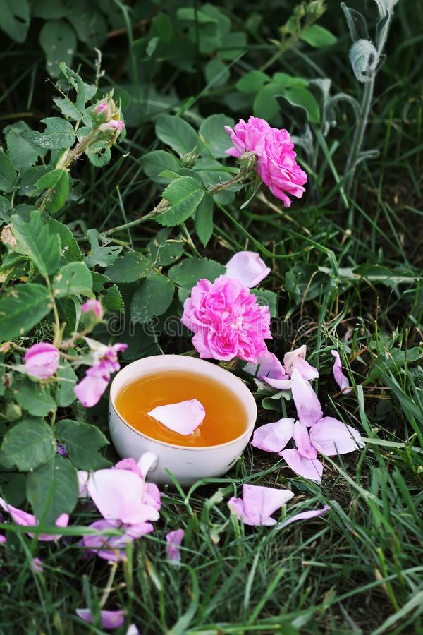 Tea in country style in summer garden stock images
