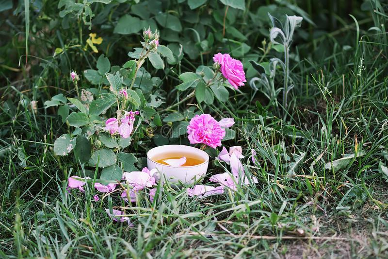 Tea in country style in summer garden in the village. stock images