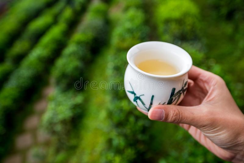 Tea in a cup with garden field as a background stock images