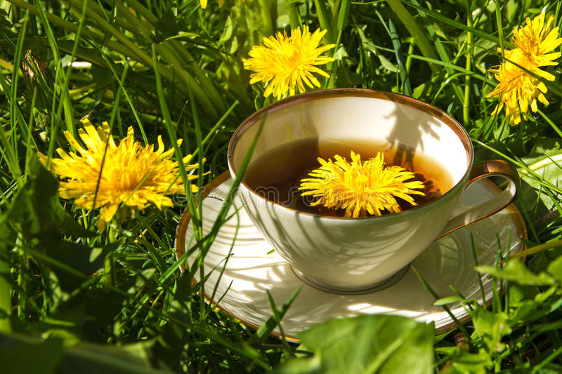 Tea from dandelion in a china cup standing outside in the lawn b. Tea from dandelion in a china cup standing outside in the sunny lawn between dandelion leaves stock images