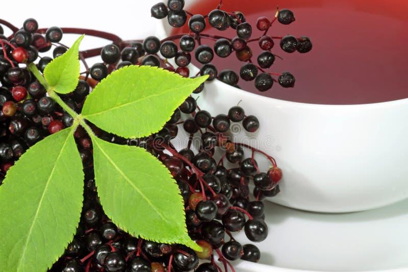 Download Tea elder stock image. Image of leaf, infusion, berries - 11409209
