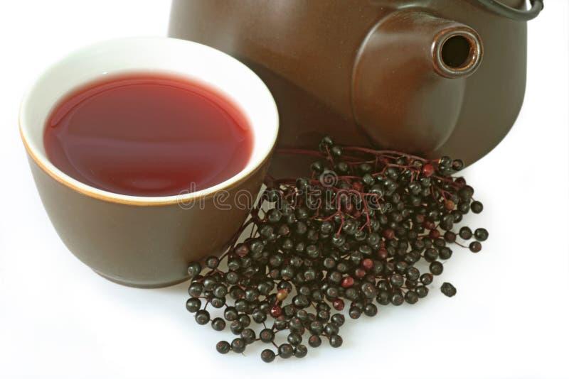 Download Tea elder stock image. Image of teapot, nature, bush - 11628633